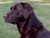 Kane 2003