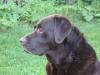 Kane 2006